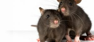 Mice Protection EMPT London